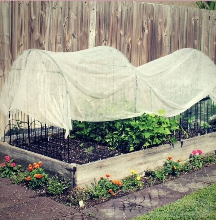 tropical garden ideas-812688695237119058