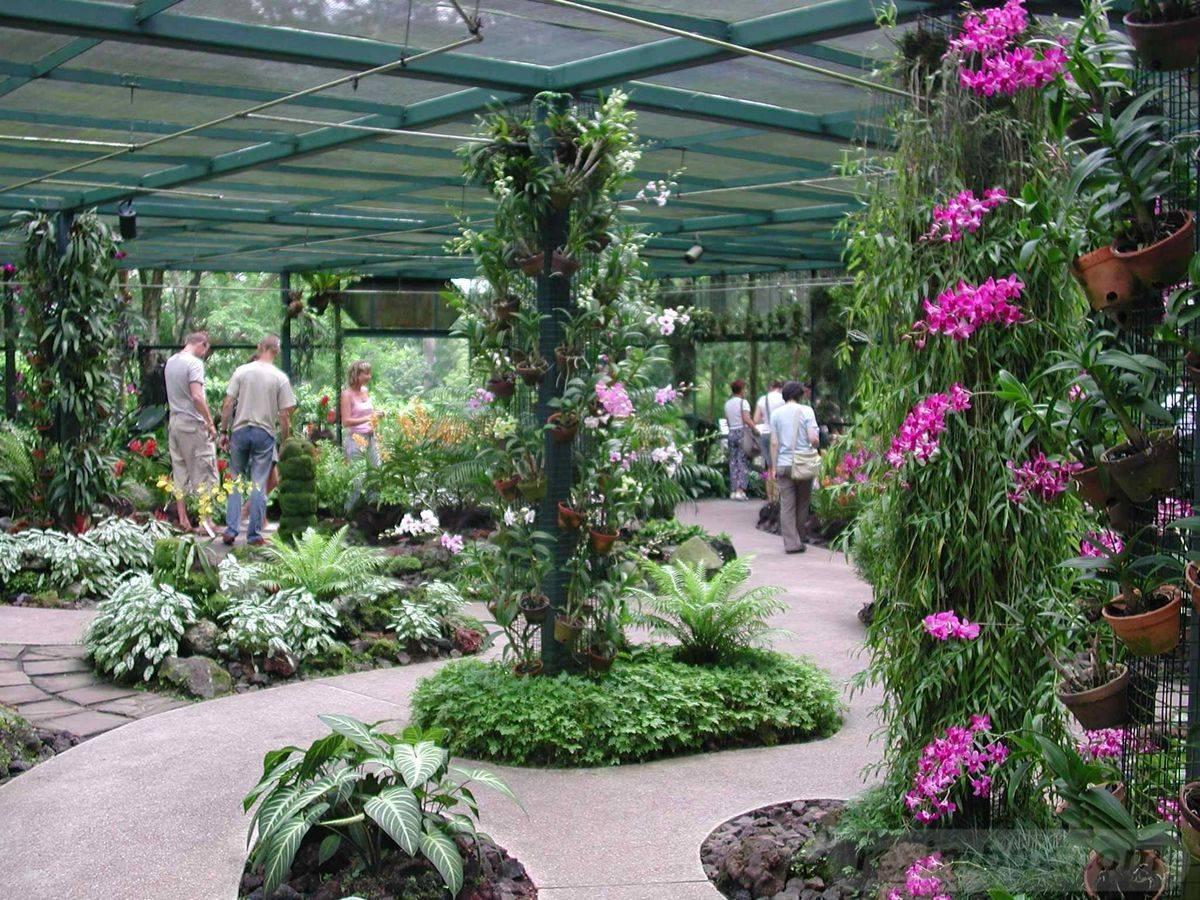 tropical garden ideas-473159504599856821
