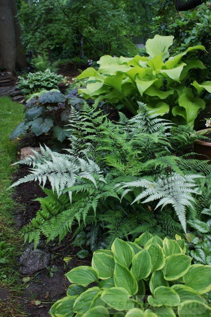 tropical garden ideas-663295851349517448