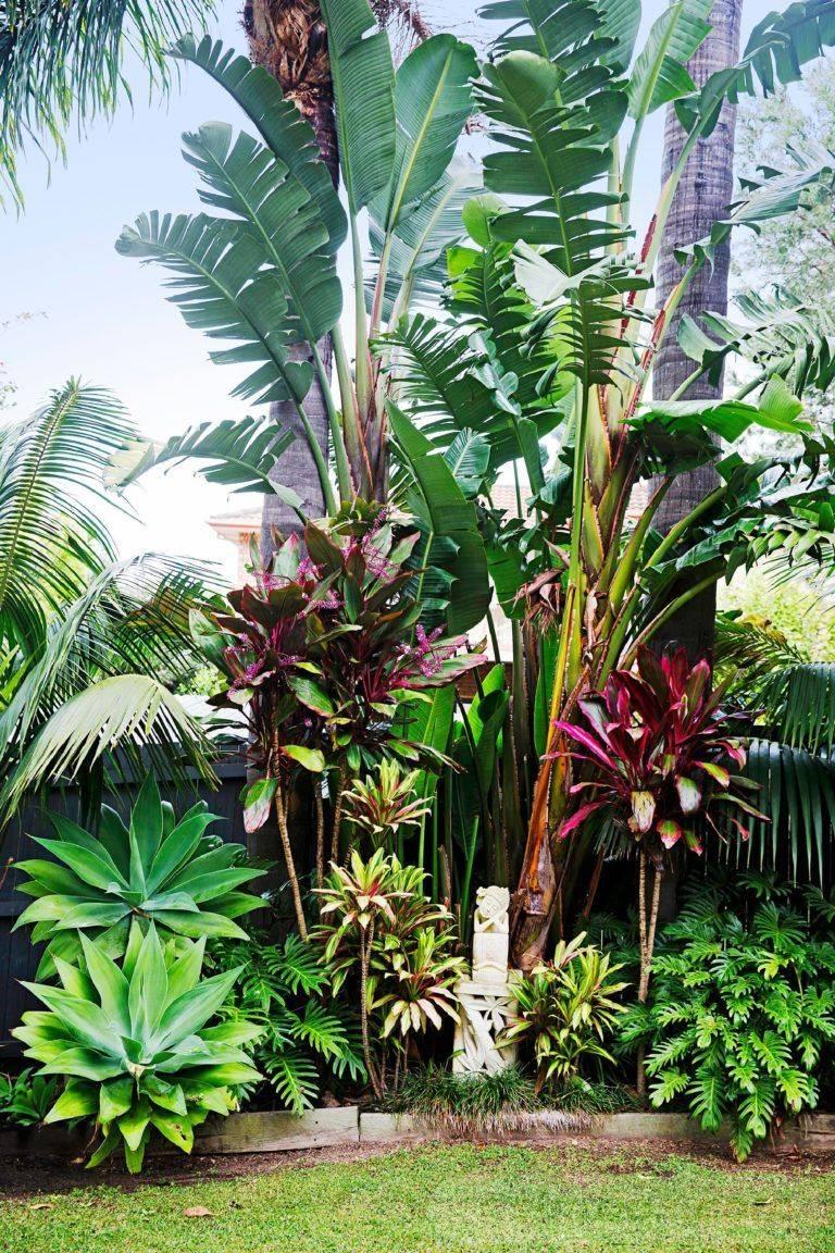 tropical garden ideas-732609064364346344