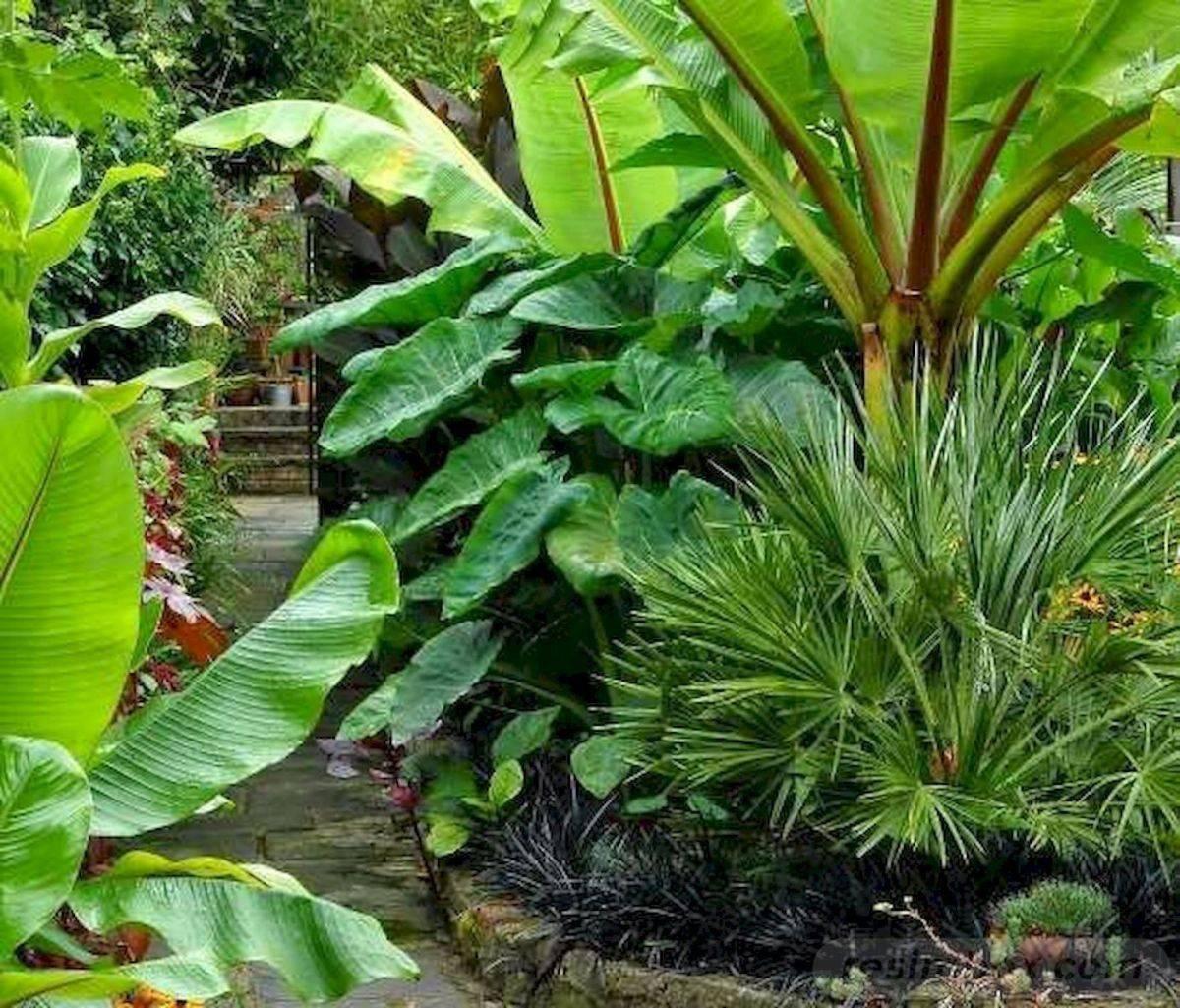 tropical garden ideas-588423507545035241