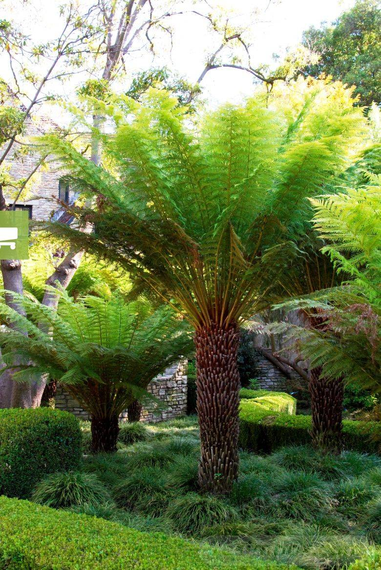 tropical garden ideas-543739355010765568