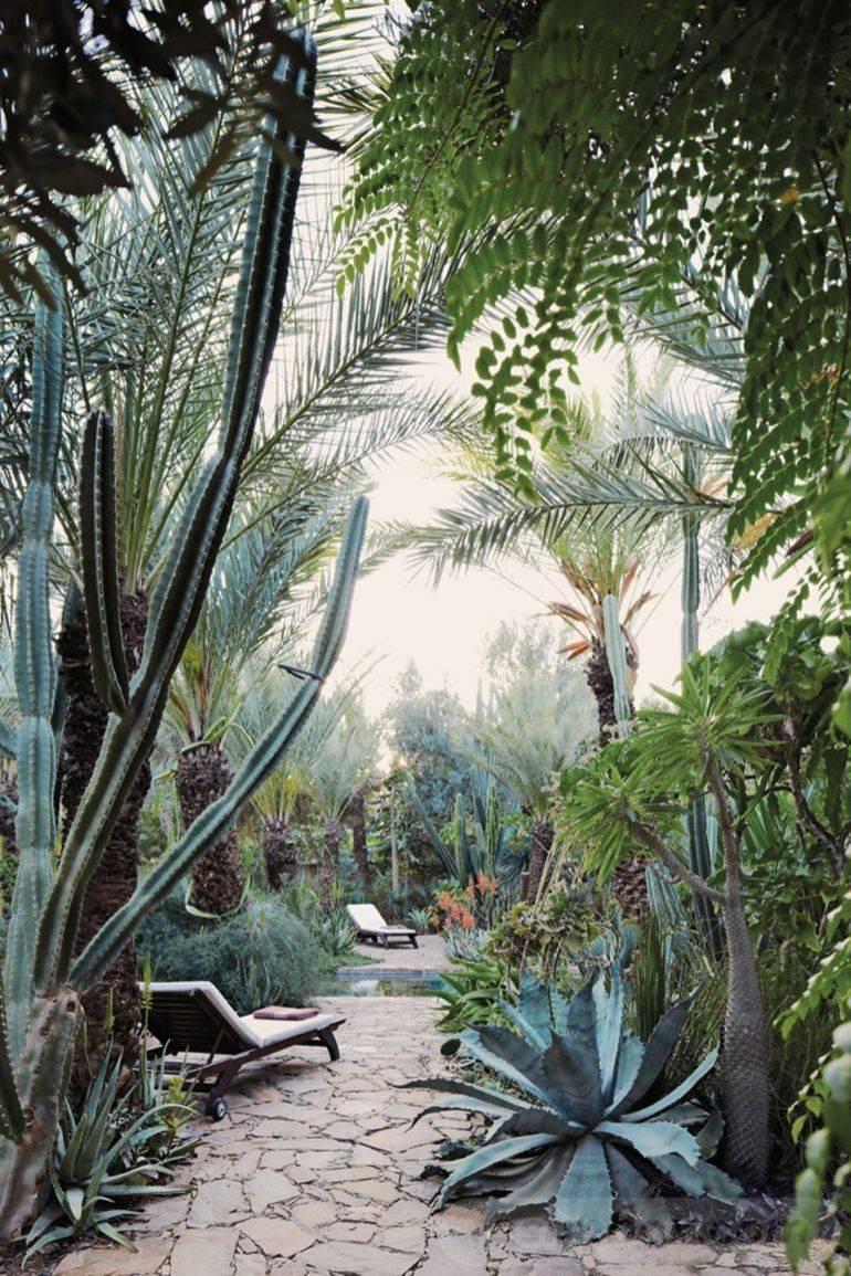 tropical garden ideas-473440979576017929