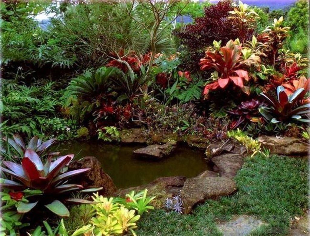 tropical garden ideas-647673990141156048