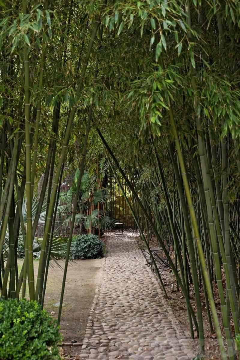 tropical garden ideas-552465079292775777