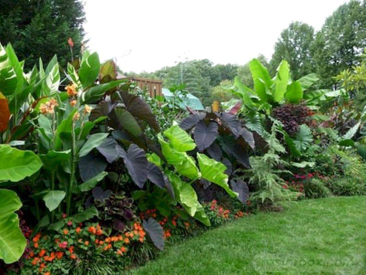 tropical garden ideas-706502260275295637