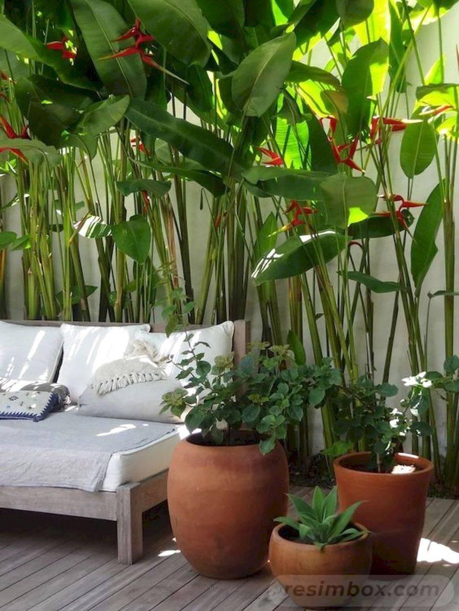 tropical garden ideas-588423507545035276