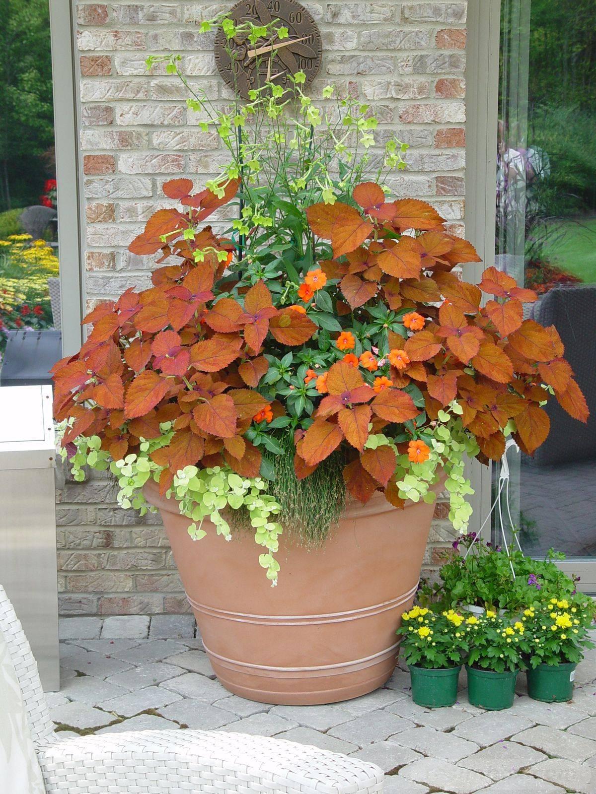 garden pot design-117023290290095906