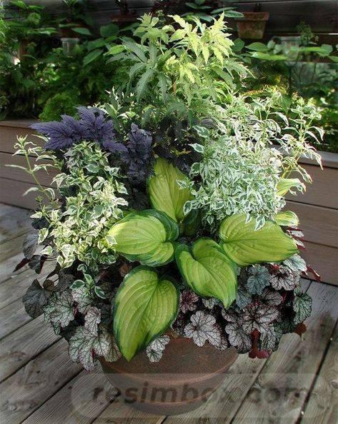 garden pot design-453174781254431509