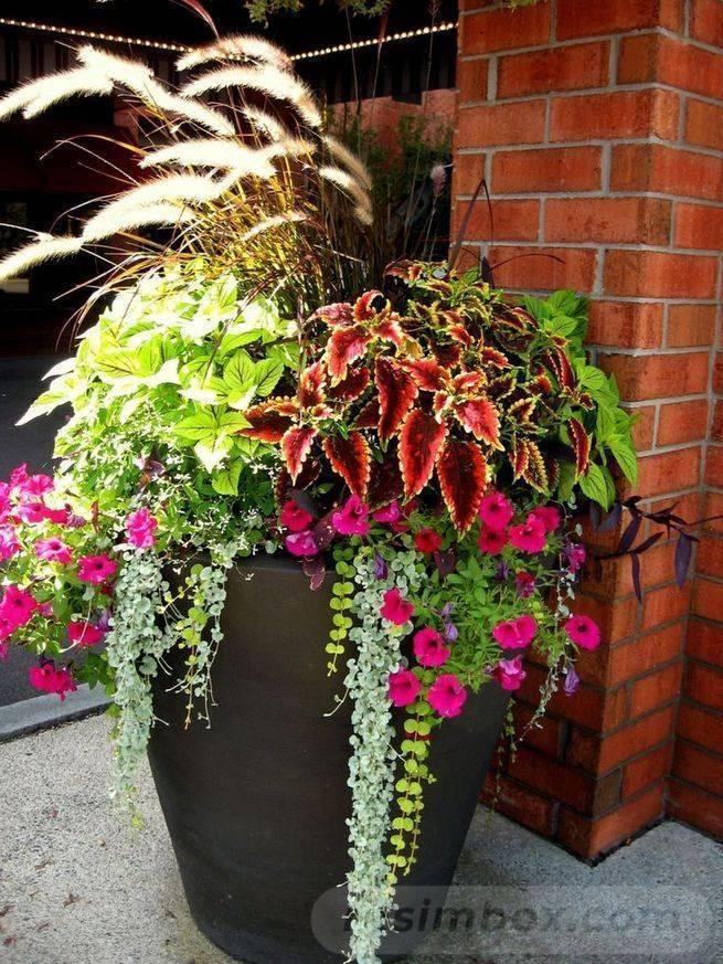 garden pot design-760967668268772618