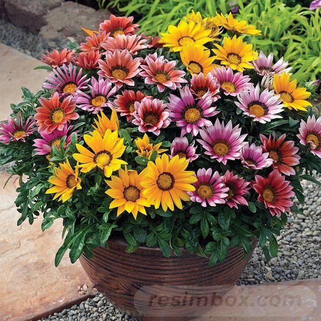 garden pot design-847661961094335088