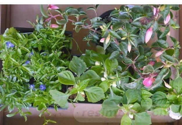 garden pot design-56787645285965615