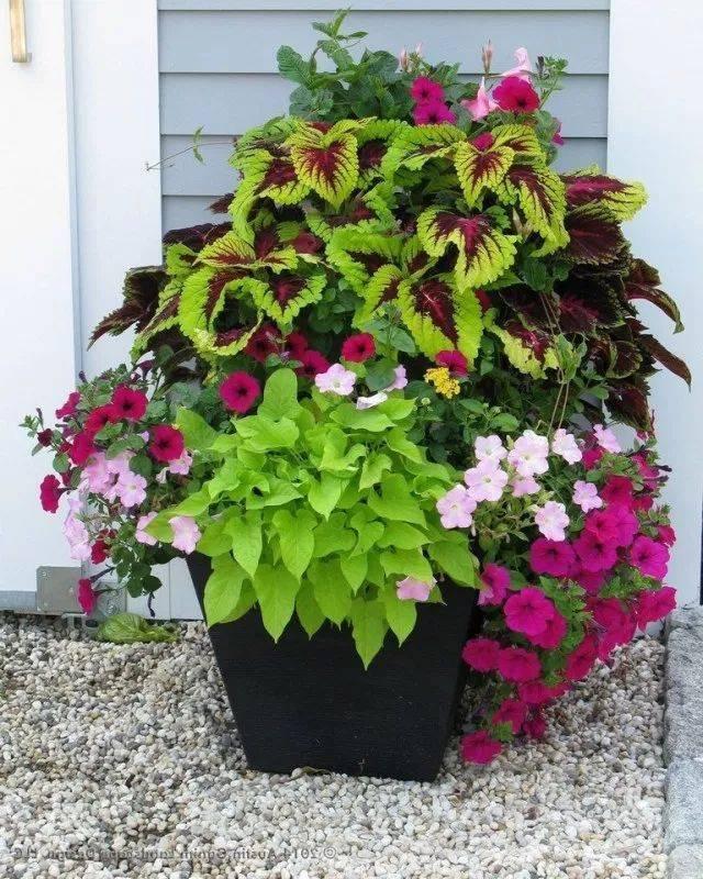 garden pot design-657314508095720335
