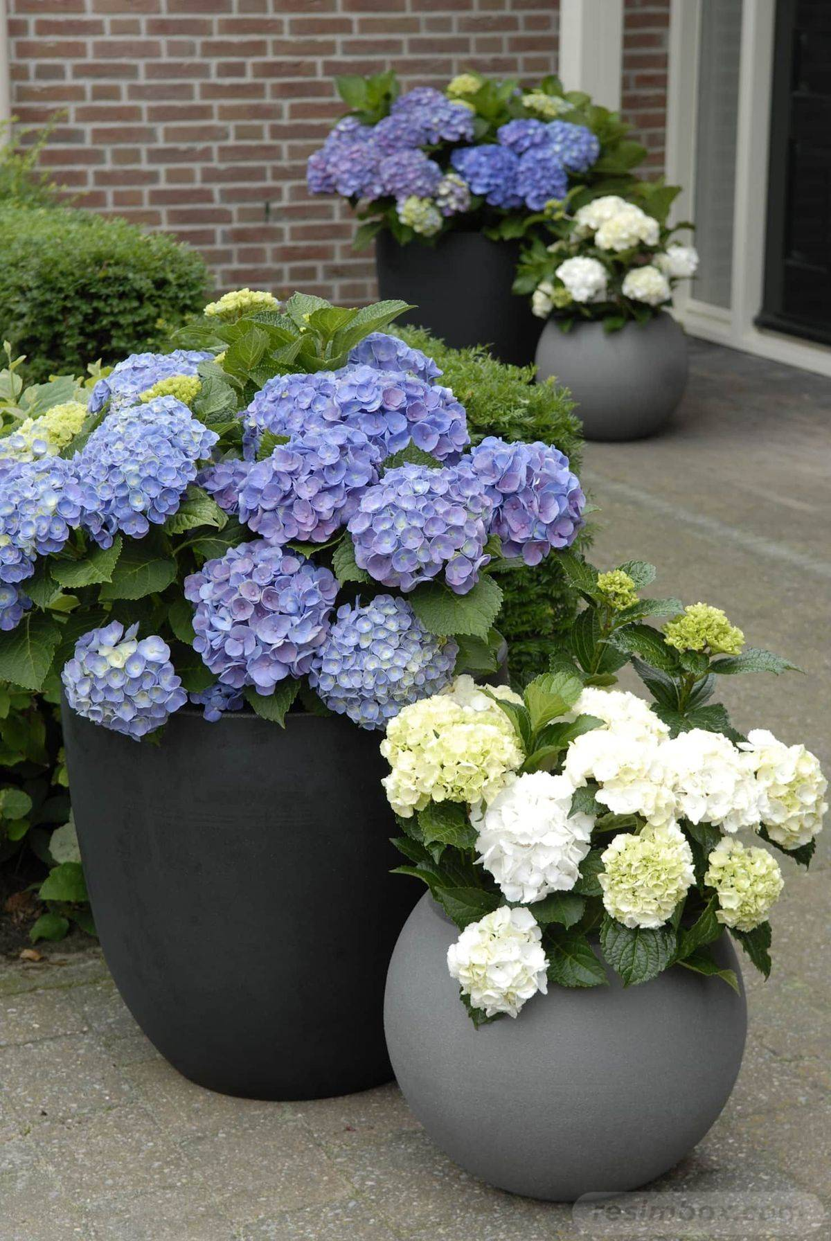 garden pot design-738660776363131184