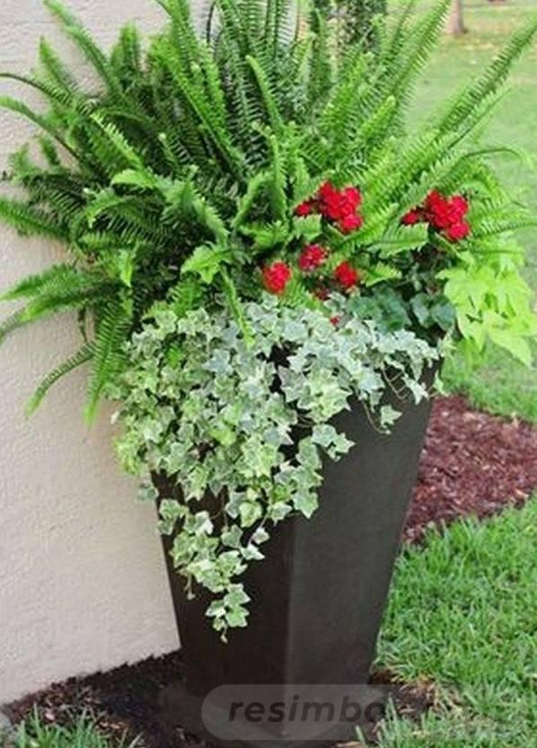 garden pot design-736338607806208669
