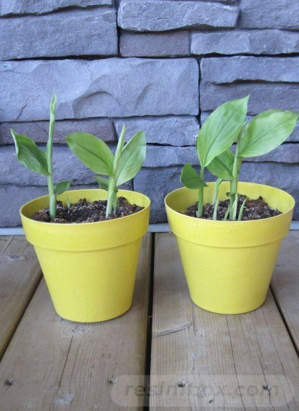 garden pot design-373165519120835423