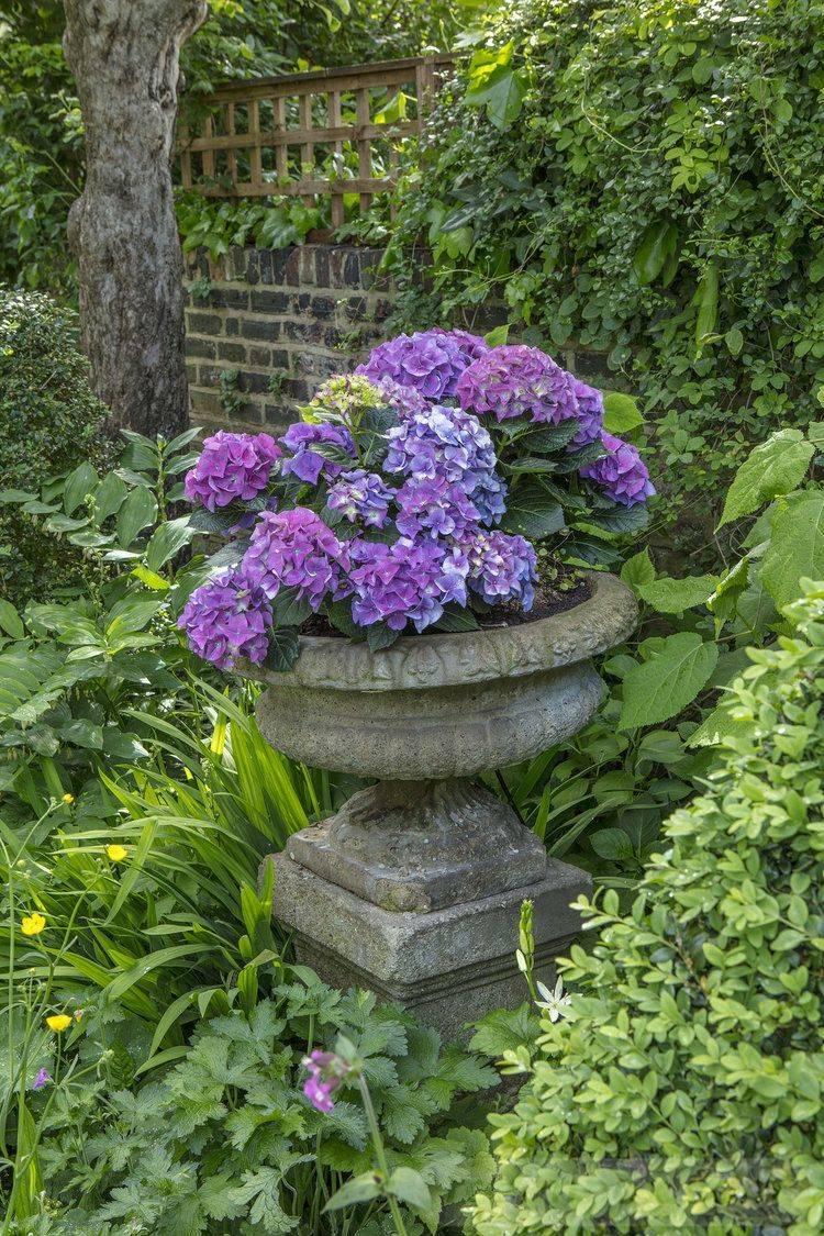 garden pot design-330592428889506453