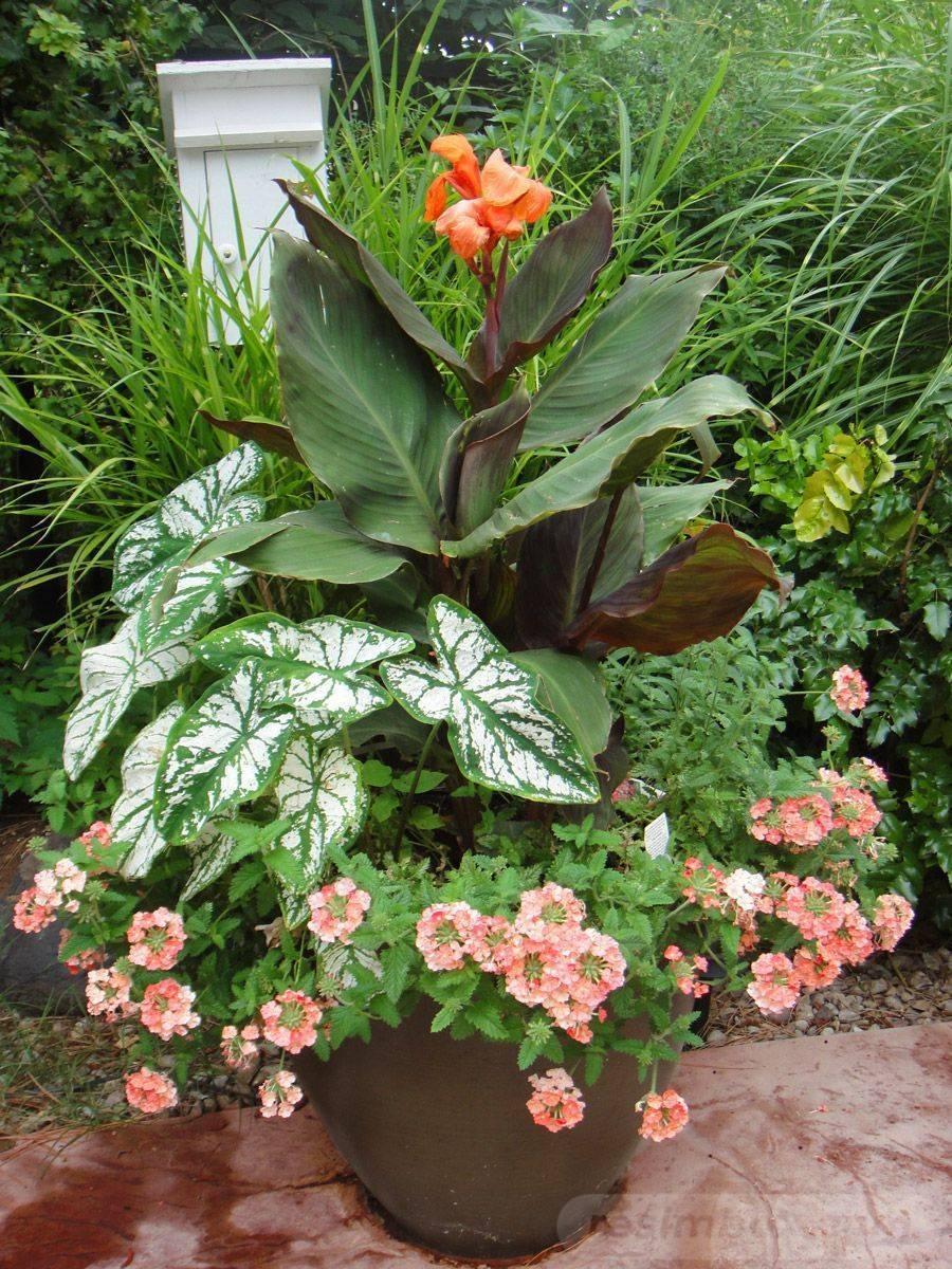 garden pot design-385480049354183149