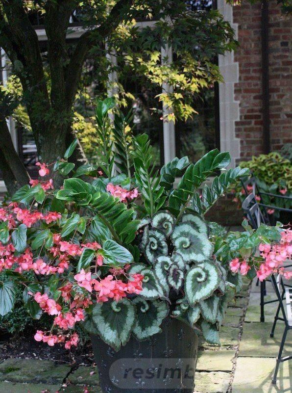 garden pot design-499055202459467800