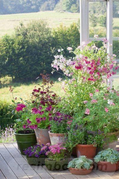 garden pot design-666392076092803305