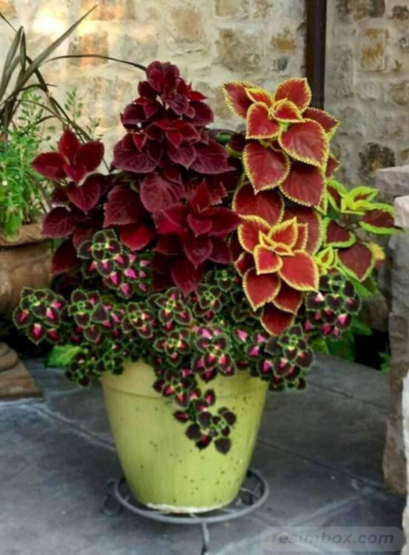 garden pot design-363947213637484684