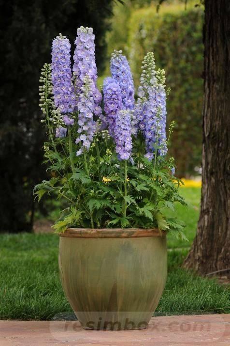 garden pot design-768989705106063497