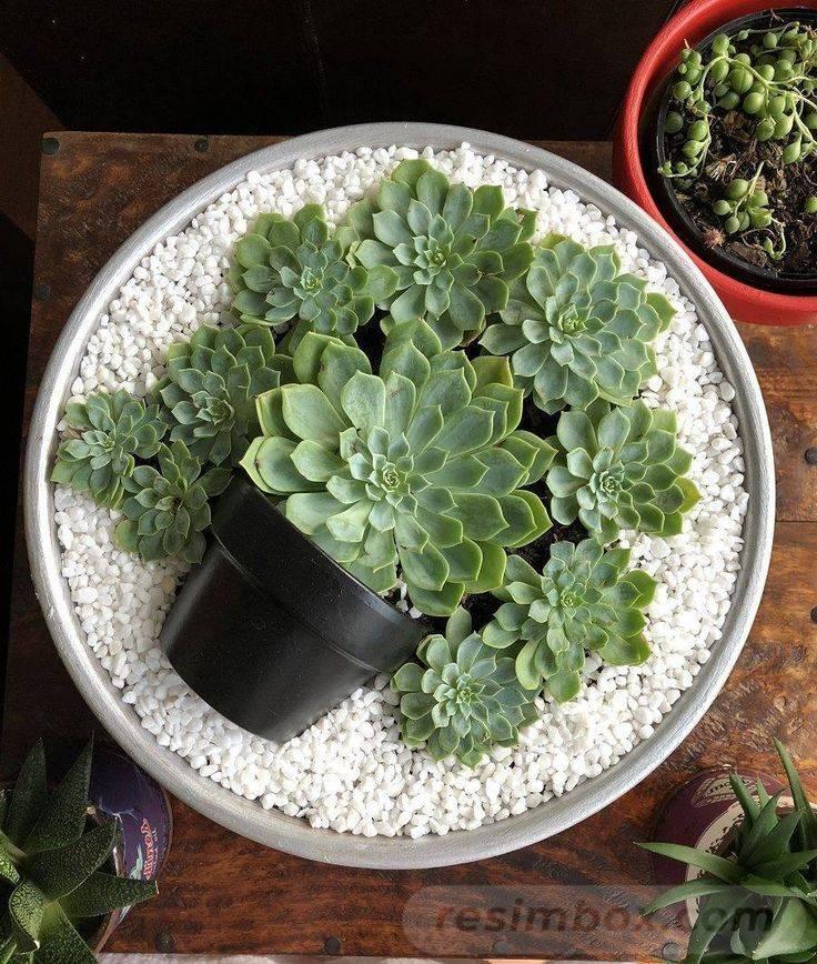 garden pot design-333688653640524619