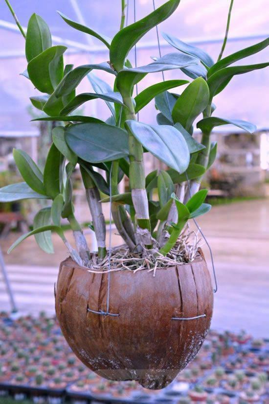 garden pot design-803751864728990613