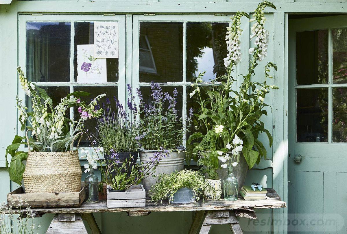 garden pot design-525232375286652521