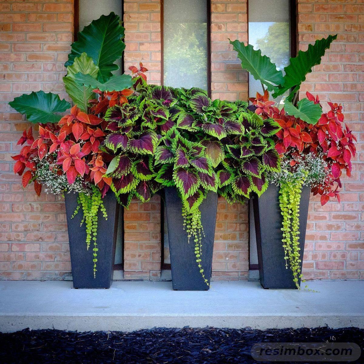 garden pot design-132434045278836179