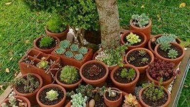 10 Wonderful  How To Make A Terracotta Garden Pot