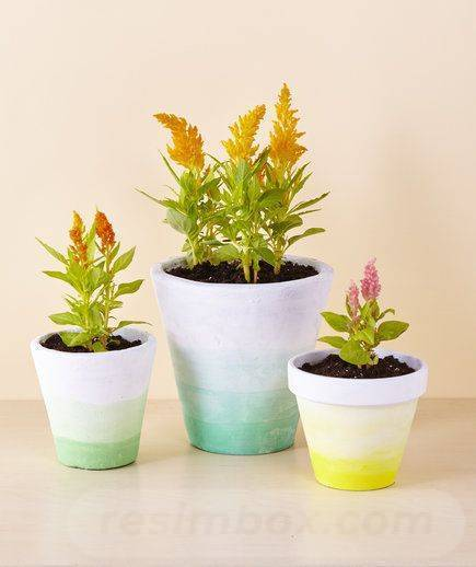 garden pot design-46232333653355906