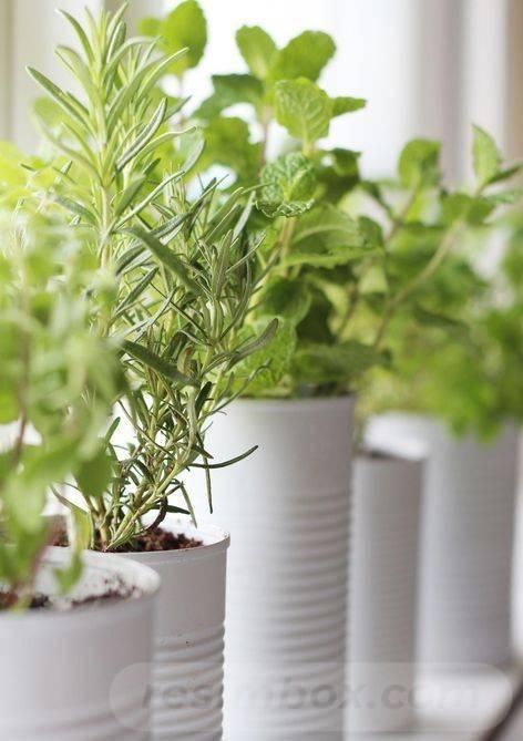 garden pot design-AcOBuNWTvIfIxguF3M9nW3jFjIUvwGsWbDh8ZATttCKTXfDRXwKCF70