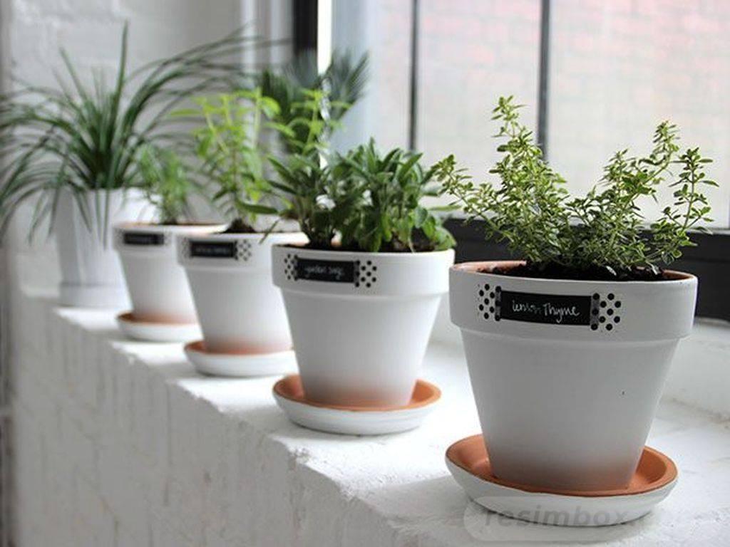 garden pot design-743938432174585571