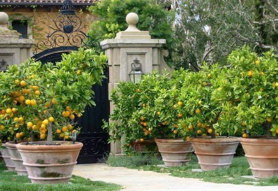 garden pot design-58476495147478734