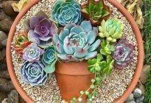 10 Lovely  Love Your Pots İnspiring Practical İdeas For Container Gardens