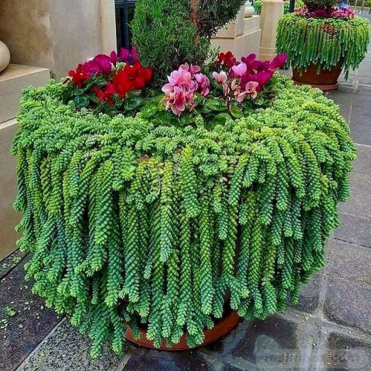 garden pot design-692498880180913382