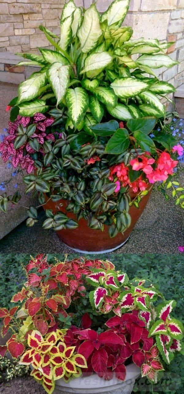 garden pot design-752875262689497012