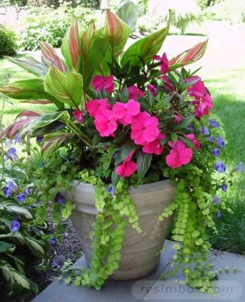 garden pot design-509258670363829102