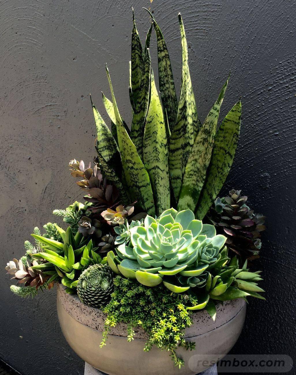 garden pot design-694258098783039632