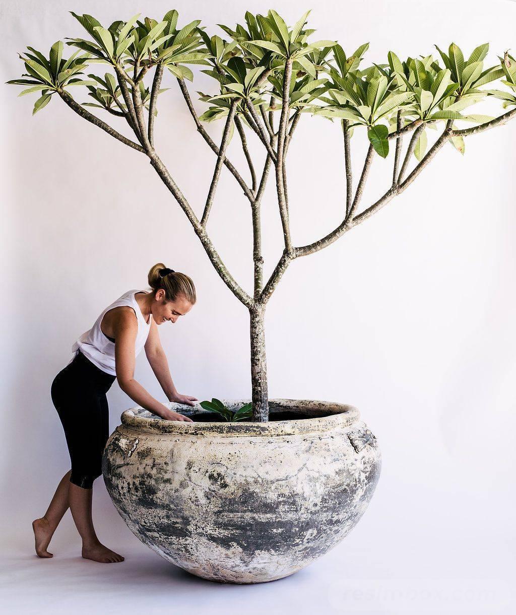 garden pot design-369858188141772733