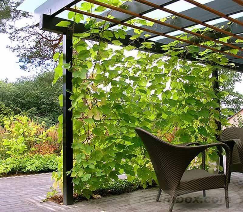 garden pot design-106679084908153680