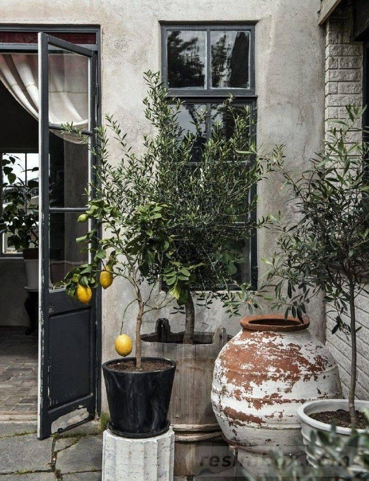 garden pot design-638314947165343924