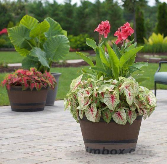 garden pot design-387872586655498379