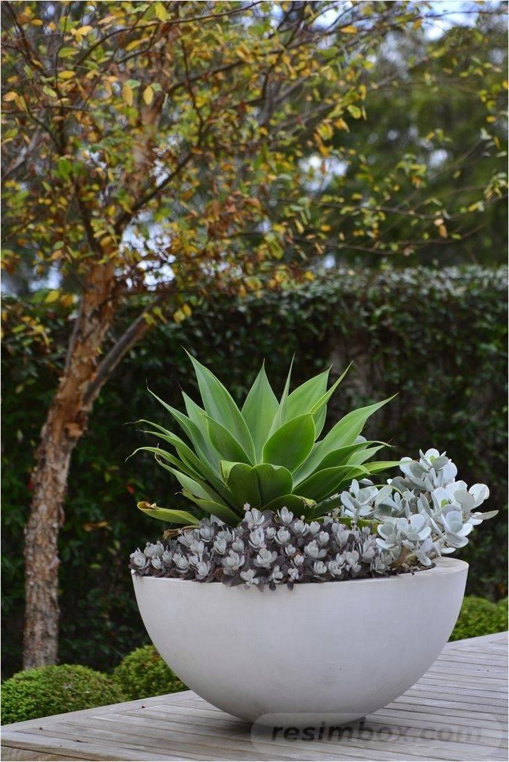garden pot design-142567144439297281