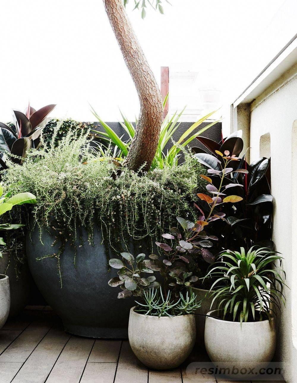 garden pot design-433190057907158420
