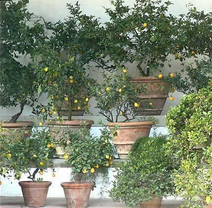 garden pot design-565483296956793836