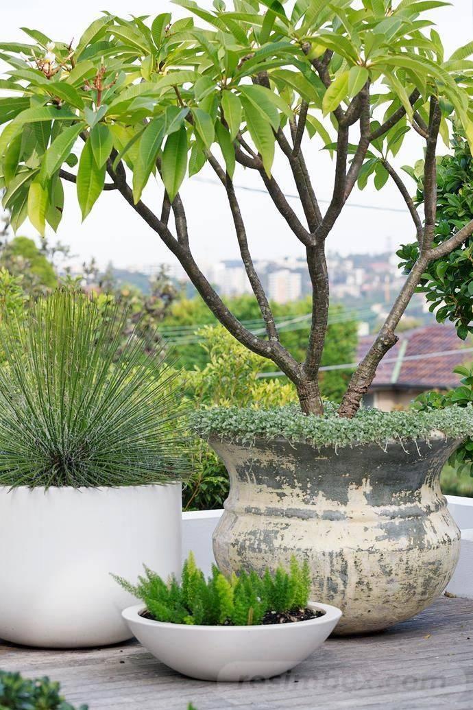 garden pot design-633740978795323171