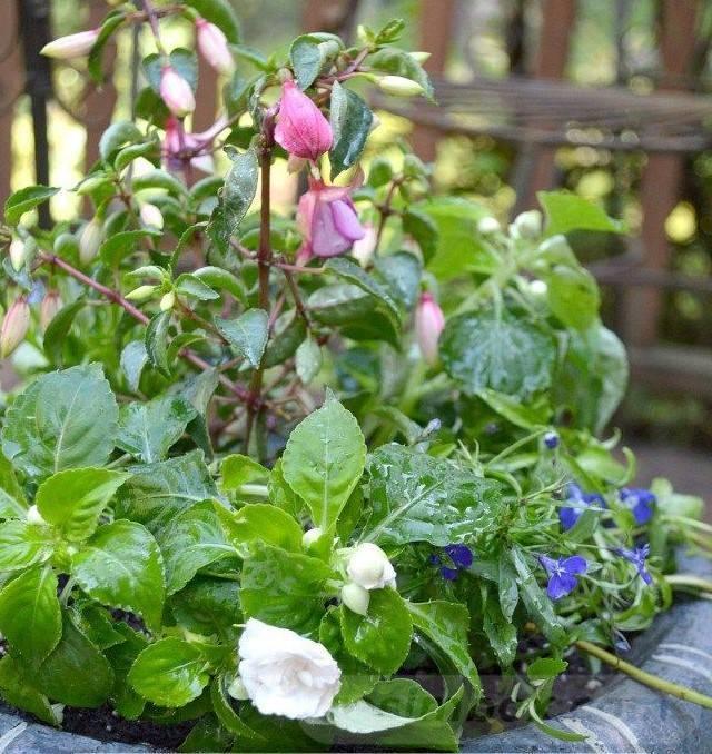 garden pot design-56787645285909981