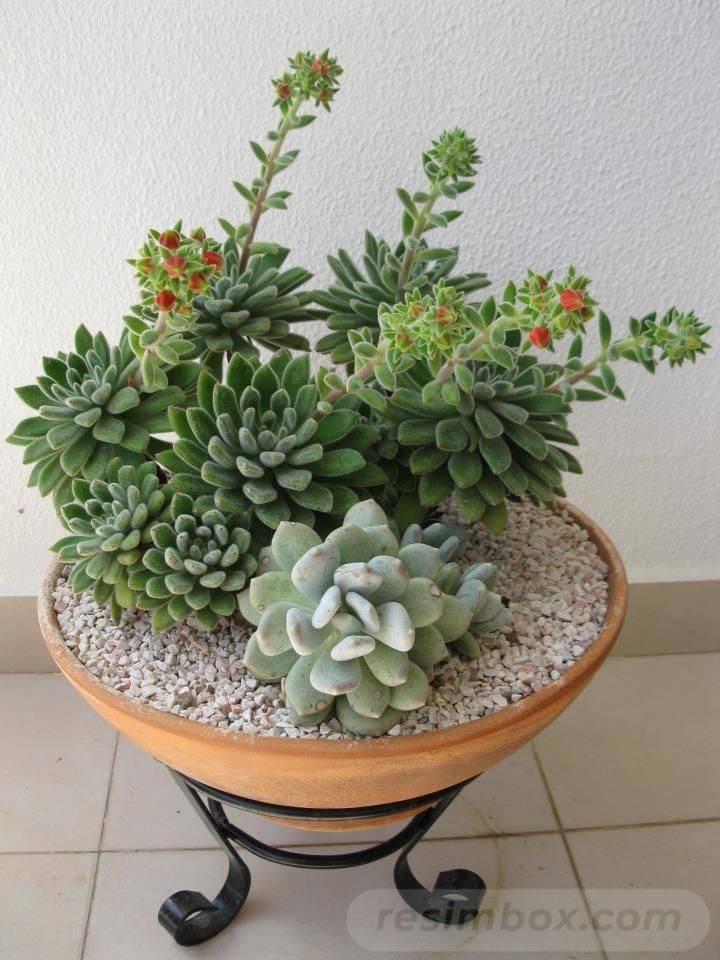 garden pot design-688980442970048802